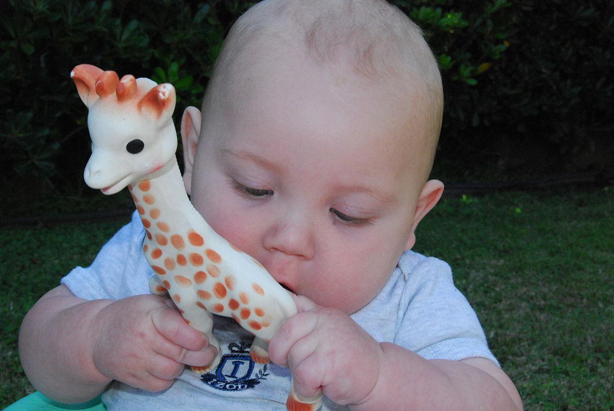 688af602ef236d Sophie, die Giraffe – Wikipedia