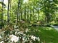 Bad Sassendorf – Kurpark - Rhododendronpark am 6. Mai 2016 - panoramio - Edgar El (4).jpg