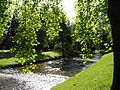 Baden-Baden - Lichtentaler Allee mit Oos.jpg