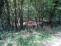 Balade en Forêt de Verrières le 20 août 2017 - 027.jpg