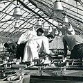 Bangor greenhouses.jpg