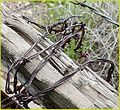 Barbed Wire 3-23-14b (13673463154).jpg