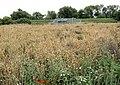 Barley and pumping. - geograph.org.uk - 529211.jpg