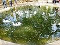 Barquisimeto 3001, Lara, Venezuela - panoramio.jpg