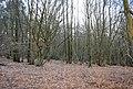 Battle Wood (2) - geograph.org.uk - 1726823.jpg