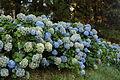 Batumi - Botanical Garden (9461062186).jpg