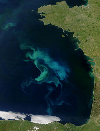 Bay of Biscay - Phytoplankton bloom along the Bay of Biscay (photograph by Terra (EOS AM-1) satellite)