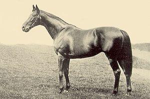 Bayardo (horse) - Image: Bayardo