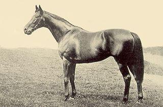 Bayardo (horse) British-bred Thoroughbred racehorse