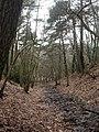Beacon Hill, stream - geograph.org.uk - 1728274.jpg