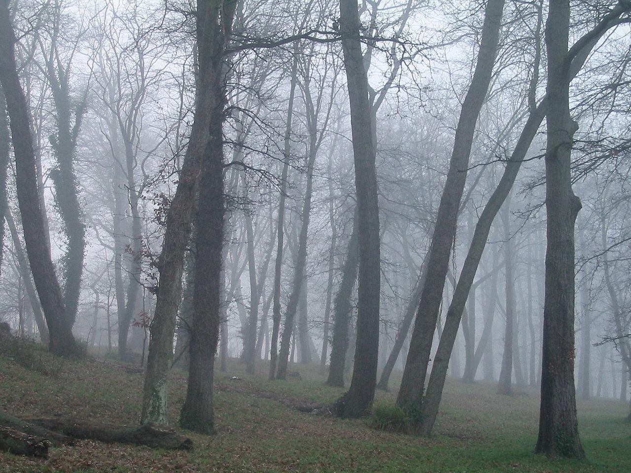 Árboles en la niebla.