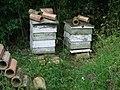 Beehives - geograph.org.uk - 1367711.jpg