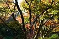 Bellevue Botanical Garden 21 - Yao Garden.jpg