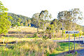 Belli Park Sunshine Coast Queensland Australia (5).jpg
