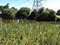 Benkid77 Puddington-Shotwick footpath 26 110809.JPG