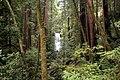 Berry creek - panoramio - Vadim Manuylov (2).jpg