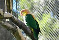 Beto Carrero Zoo - panoramio (26).jpg