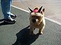 Beware the terrier (2957624242).jpg