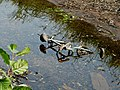 Bicycle in empty Stourbridge Canal - geograph.org.uk - 971973.jpg