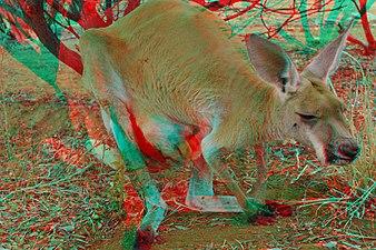 Big Red Kangaroo with Joey 3D.jpg