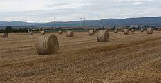 Bij Assenheim, panorama foto5 2016-08-10 13.16.jpg
