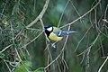 Bird (129125259).jpeg