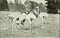 Bird notes (1904) (14771981353).jpg