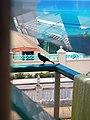 Birds of Barbados 003.jpg