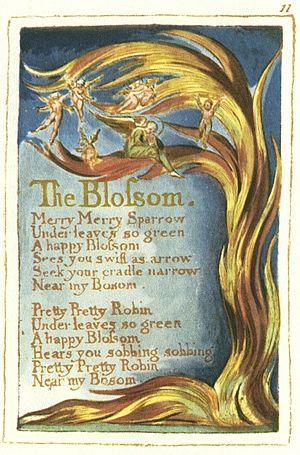 Blake The Blossom 1.jpg