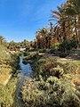 Bled El Hadhar valley in Tozeur, Tunisia (Djerid Oasis).jpg