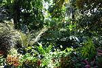 Bloedel Floral Conservatory, Queen Elizabeth Park - Vancouver, Canada - DSC07556.JPG