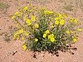 Blumen Koichab 01.JPG