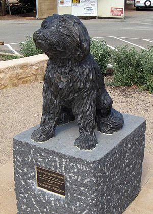 Bob the Railway Dog -  Bob's Statue - Main Street Peterborough
