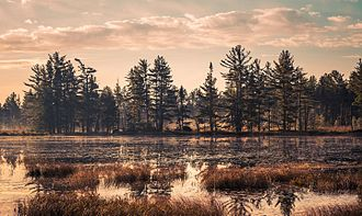 Lake Superior State Forest - Bog in the Newberry State Forest Area