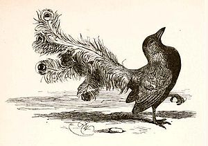 The Bird in Borrowed Feathers - Harrison Weir's illustration of The Vain Jackdaw, 1881