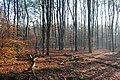 Bos bij de Bergsham (25318155199).jpg