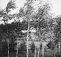 Bosbouw, buitenland, klimaat, grond, betula pendula, Bestanddeelnr 194-1300.jpg