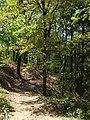 Bosco sul monte Camurcina - panoramio.jpg