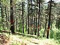 Bosque de Oma (5).JPG