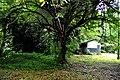 Botanic garden limbe112.jpg