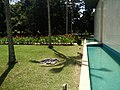 Botanical Garden in Putrajaya, Malaysia 36.jpg