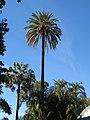 Botanical garden of Valencia 13.jpg