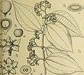 Botanische Jahrbücher für Systematik, Pflanzengeschichte und Pflanzengeographie (1920) (20376992186).jpg
