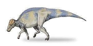 Bearpaw Formation - Brachylophosaurus