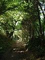 Bridleway near Okenbury - geograph.org.uk - 1511872.jpg