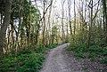 Bridleway through the woods, Babylon Down - geograph.org.uk - 2155922.jpg