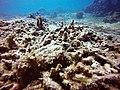 Broken Corals.jpg