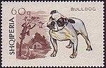 Bulldog Albania stamp.jpg