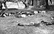 Dead civilians shot in reprisal by German paratroopers