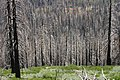 Burned Woods, South Lake Tahoe, CA - panoramio (3).jpg